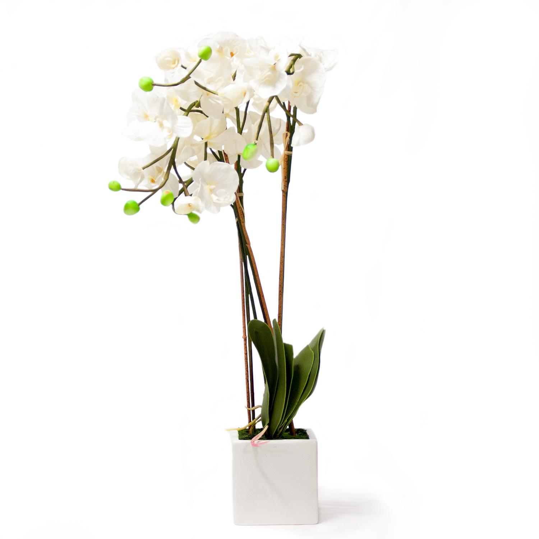 Каталог цветов: названия и фото, описание цветов, виды и сорта